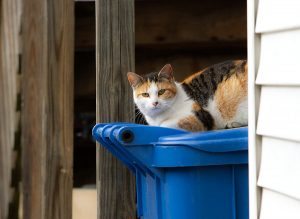 cat on a chicago trash can
