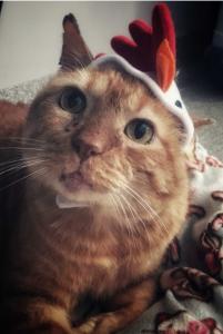 leonardo in a chicken hat
