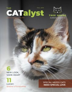 The CATalyst Magazine cover