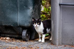 cat near trash cans