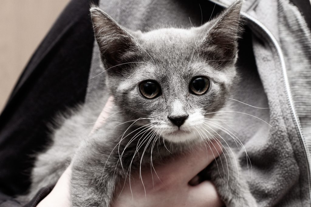 Saving Kittens from Florida On A Private Plane