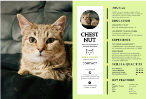 chestnut the cat's resume