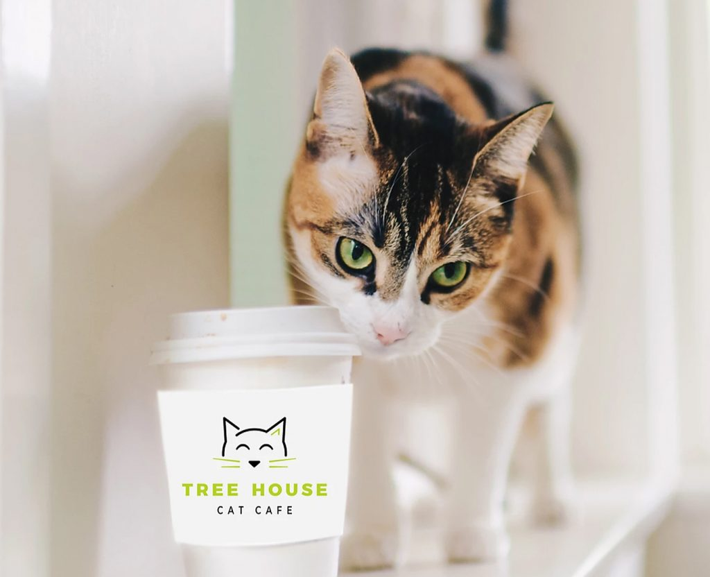 Cat Cafe Closed March 12-15