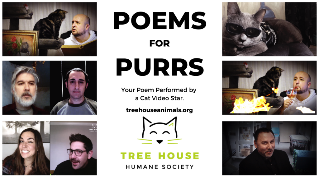BIG NEWS: Cat Video Stars Read Your Poems to Support Our Cats!
