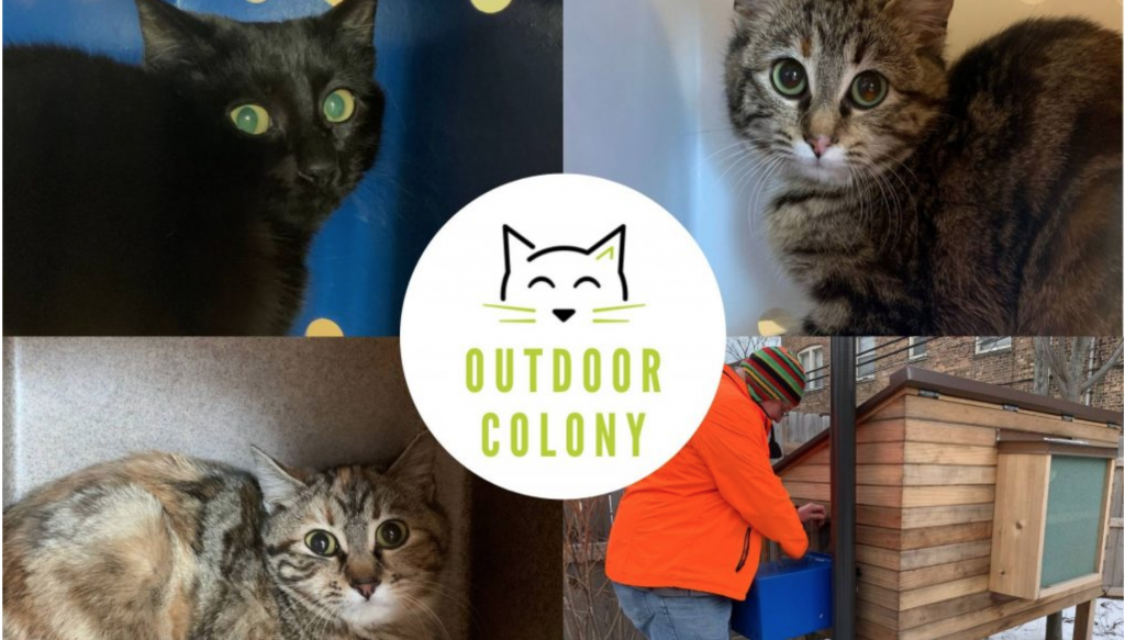 Meeting & Feeding Our New Outdoor Colony: Merrick Gives Back