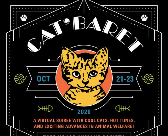 Catbaret Banner Placehhold