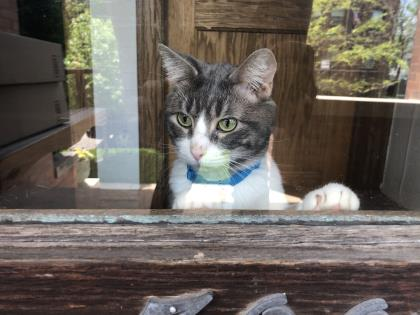 Resident Profile: Dillon