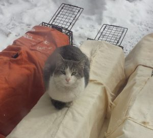 Cat on outside shelters in snow