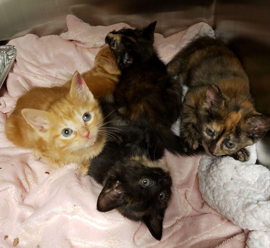 The Scoop on Kitten Season